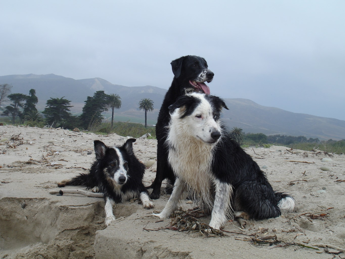My 3 Dogs at the Beach